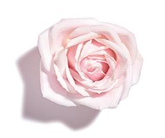 Olej z róży muszkatołowej