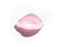Ekologiczny Hydrolat Z Róży