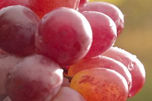 Woda winogronowa bio
